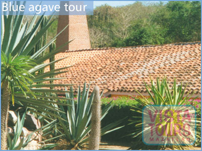 Tequila Tour - Agave Tour - Mazatlan tours - Mazatlan Activities